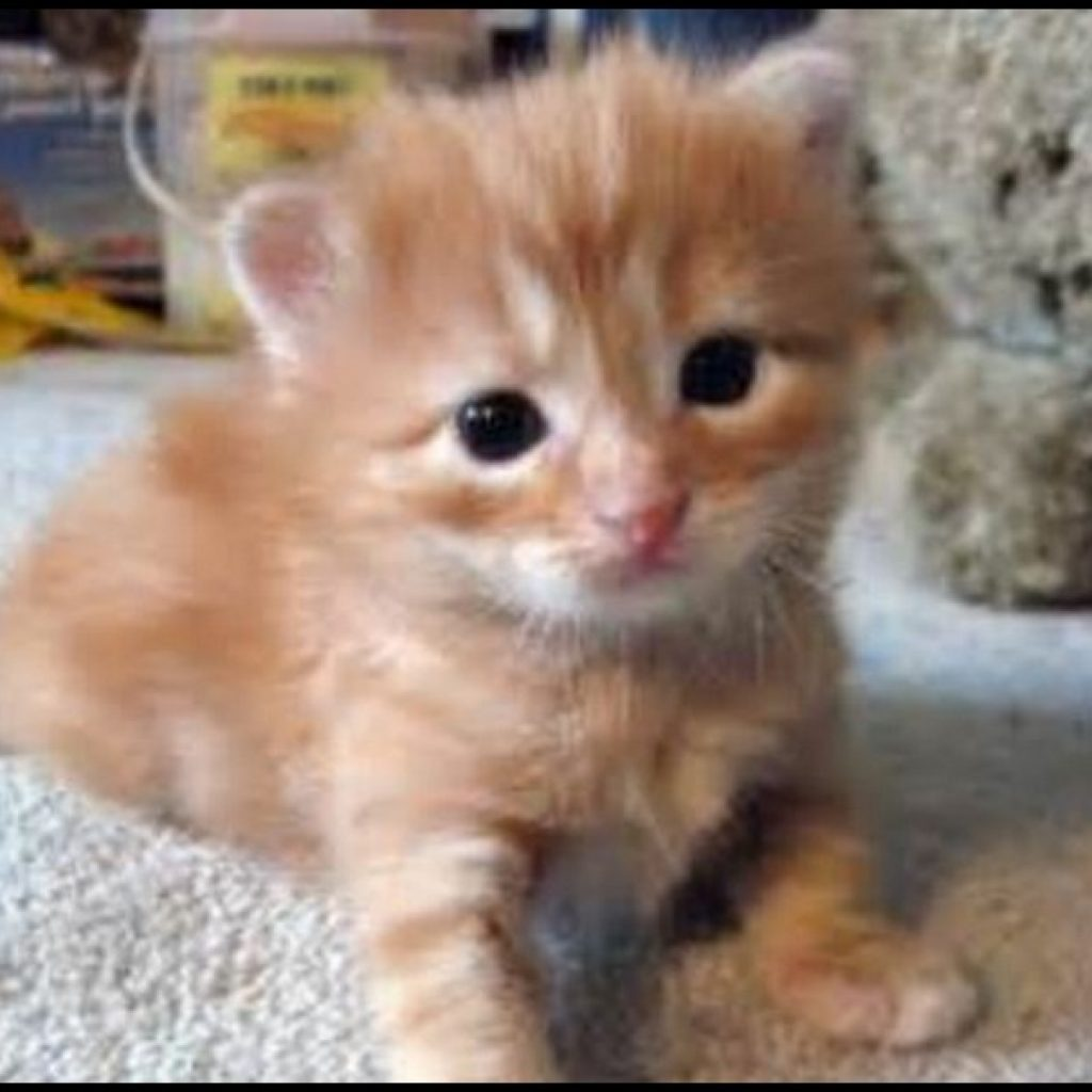 kitten dragging back legs