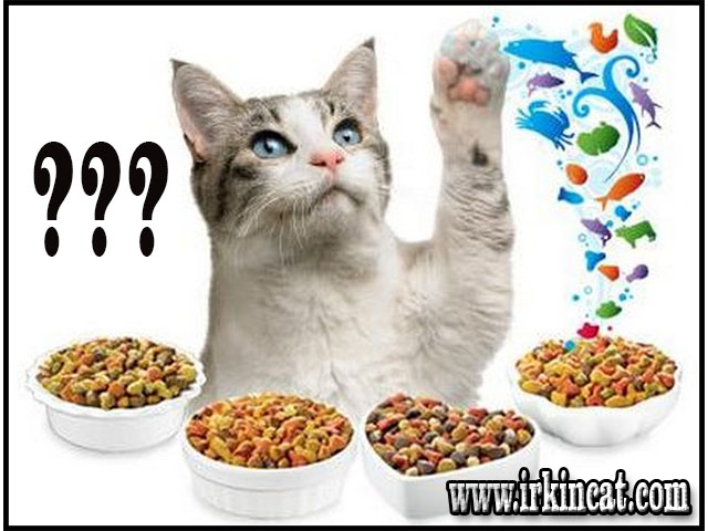 What Do Kittens Eat? This is What Must be Prepared For Kittens
