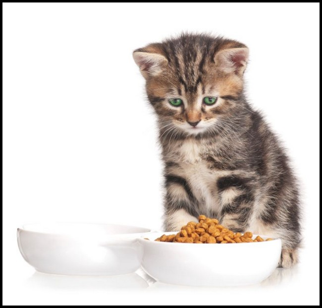 The Right Time When Can Kittens Eat Hard Food