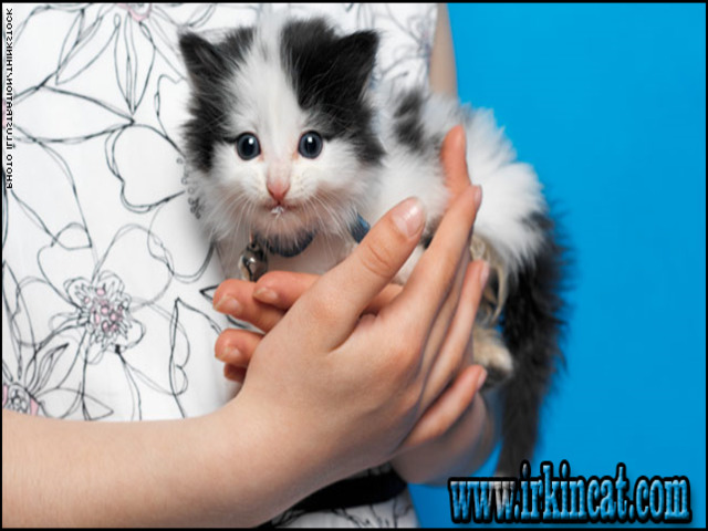 Where To Adopt A Kitten Exposed | irkincat com
