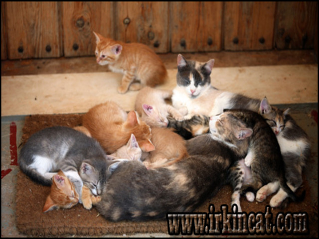 where-to-get-kittens Dirty Facts About Where To Get Kittens Revealed