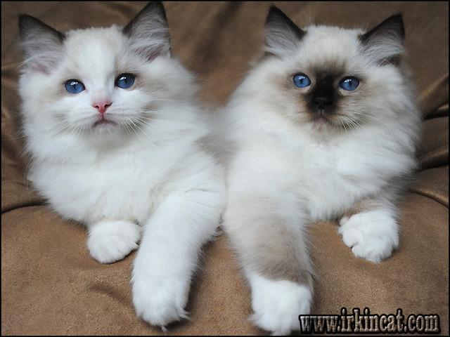 free-kittens-in-michigan The Insider Secret on Free Kittens In Michigan Exposed