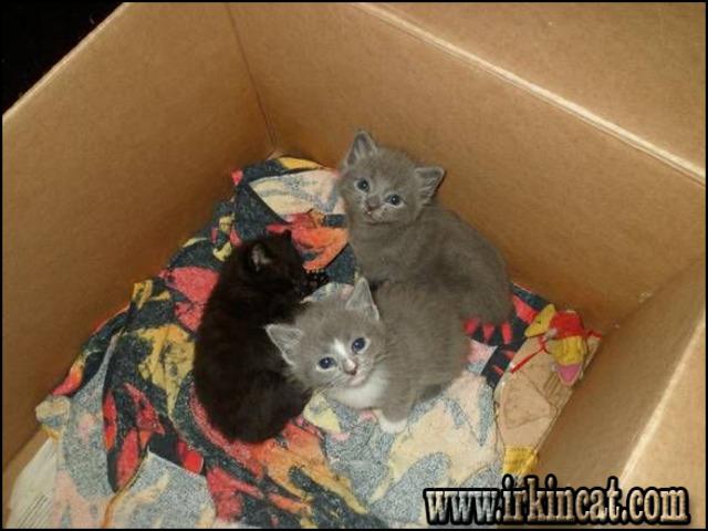 free-kittens-in-ri Top Advice on Free Kittens In Ri - www.irkincat.com