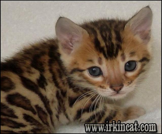 free-kittens-toledo-ohio The Secret of Free Kittens Toledo Ohio Nobody Is Talking About