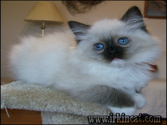 Private Facts on Kittens For Sale Louisville Ky That Only