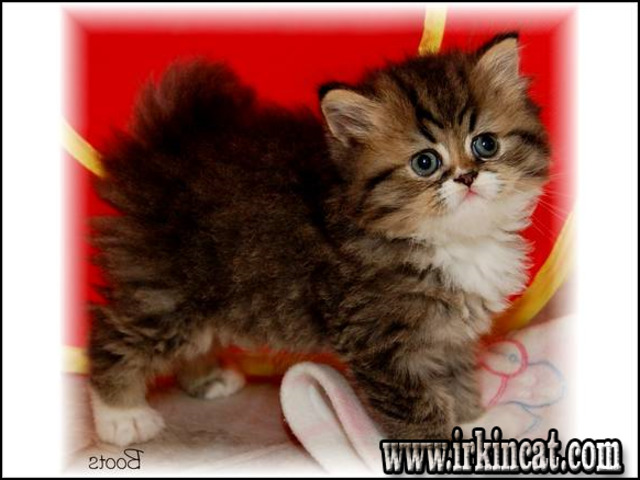 persian-kittens-for-sale-in-ky What Everybody Is Saying About Persian Kittens For Sale In Ky and What You Need to Do