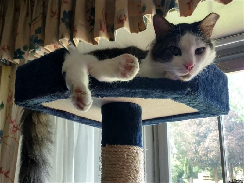 adopt-a-kitten-ct How to Choose Adopt A Kitten Ct