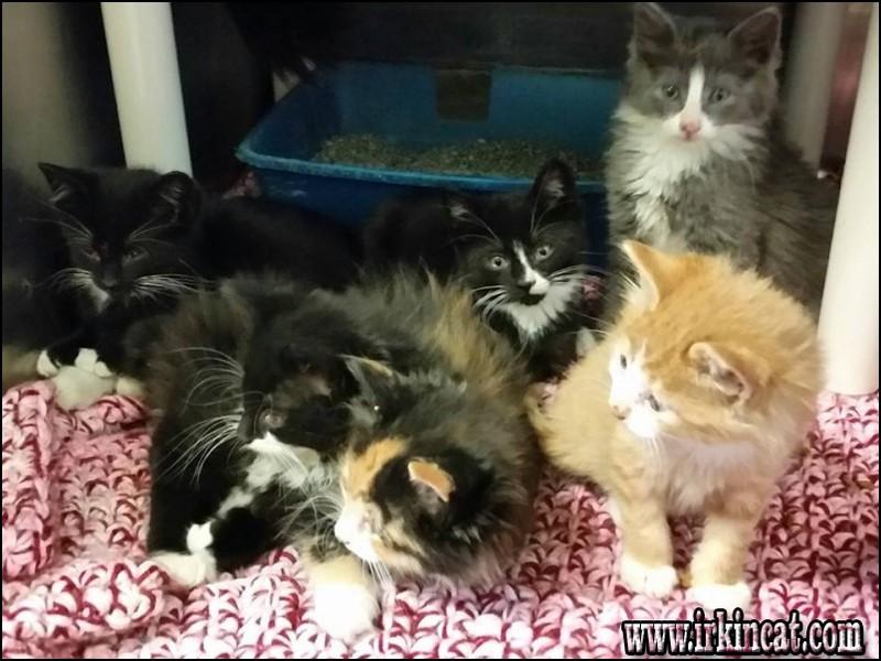 adopt-a-kitten-nj Top Adopt A Kitten Nj Reviews!