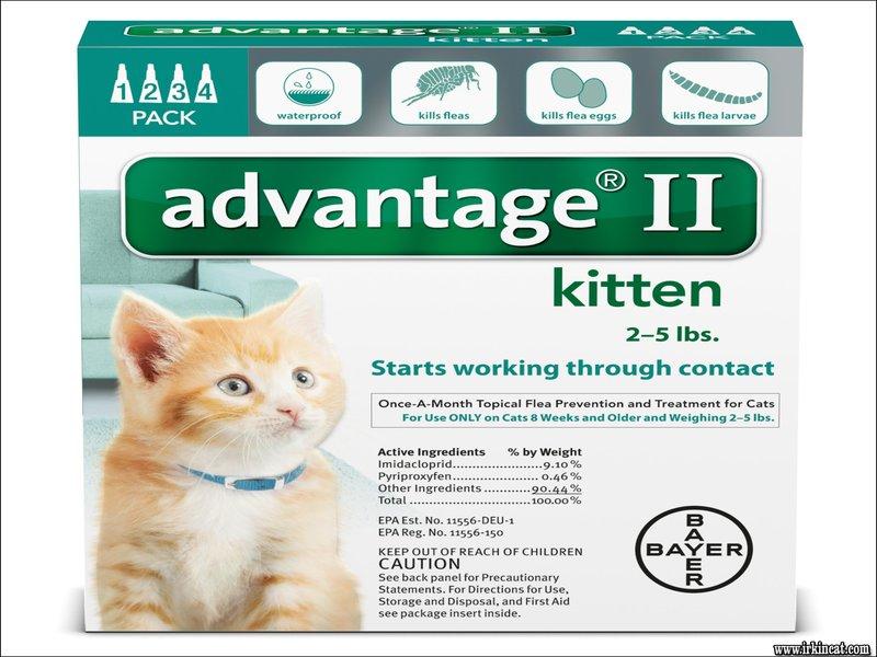 french for kitten