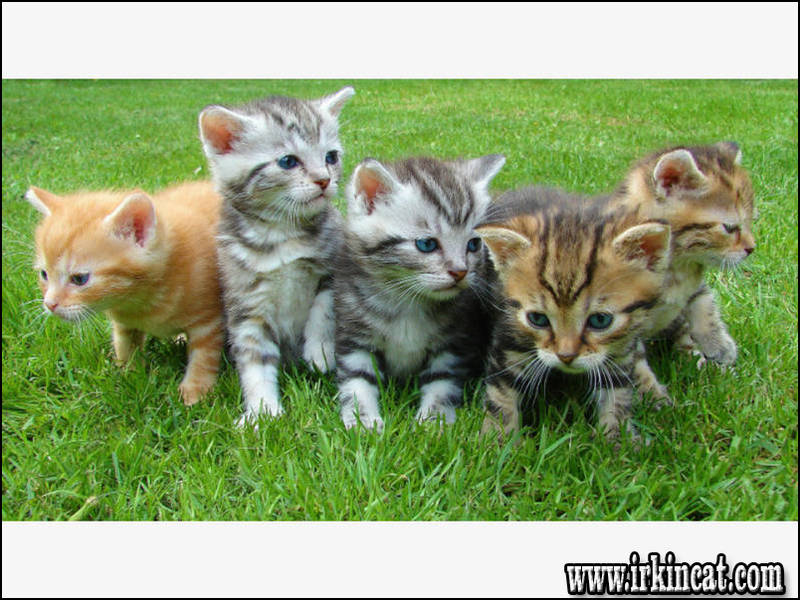 free-kittens-cleveland-ohio The Upside to Free Kittens Cleveland Ohio