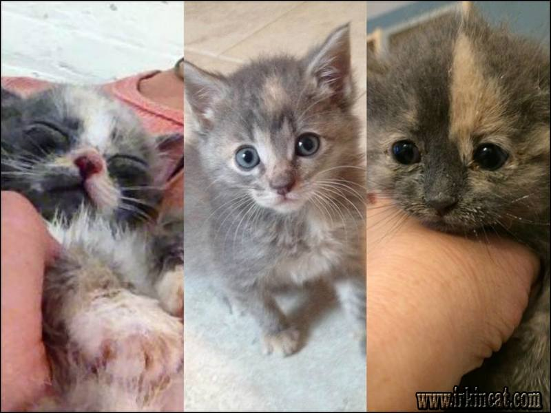 how-to-adopt-a-kitten Key Pieces of How To Adopt A Kitten
