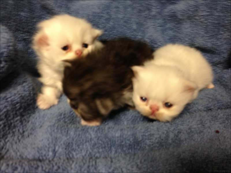 newborn-kittens-for-free Newborn Kittens For Free - What Is It?