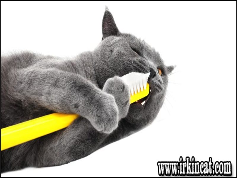 teething-toys-for-kittens Teething Toys For Kittens - a Quick Overview