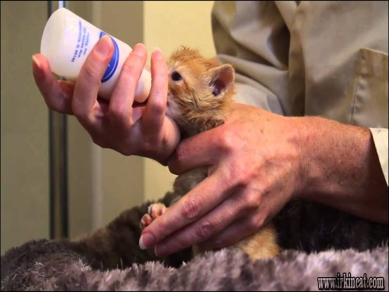 what-do-you-feed-a-kitten The Insider Secret on What Do You Feed A Kitten Uncovered