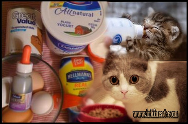 How To Make Kitten Formula Recipe Easy