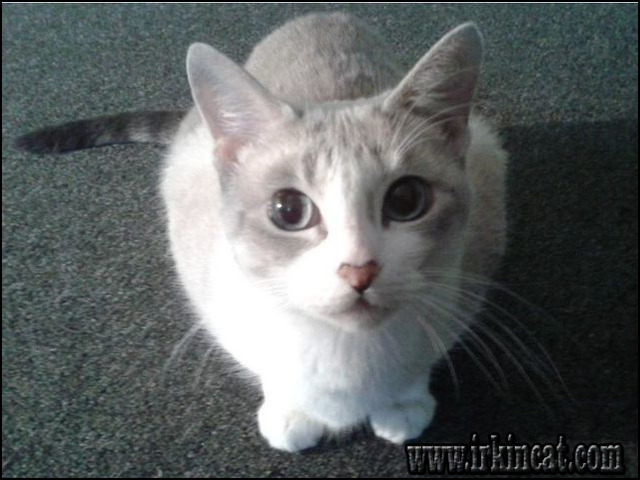 what-breed-is-my-cat-quiz New Article Reveals the Low Down on What Breed Is My Cat Quiz and Why You Must Take Action Today