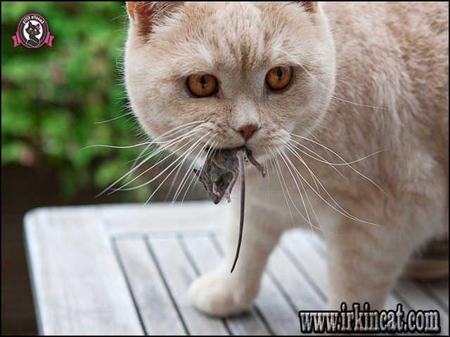what-can-kittens-eat What Can Kittens Eat Help!