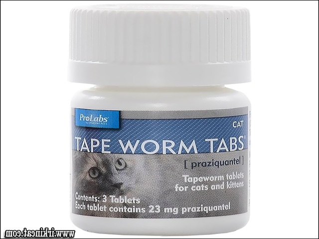 worm-medicine-for-kittens Rumored News on Worm Medicine For Kittens Discovered