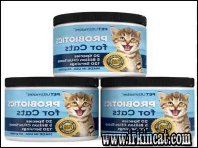 best-food-for-kittens Top Best Food For Kittens Guide!