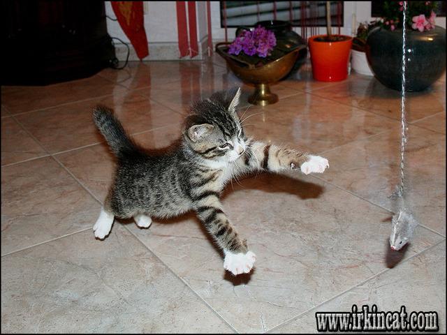 best-toys-for-kittens Definitions of Best Toys For Kittens
