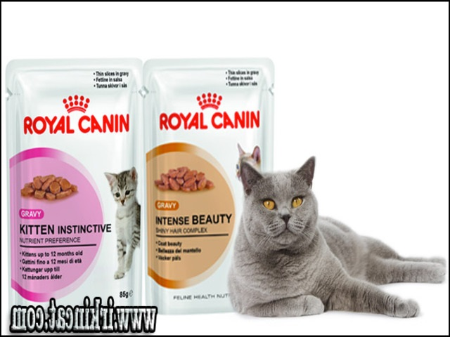 best-wet-cat-food-for-kittens The Run Down on Best Wet Cat Food For Kittens Exposed