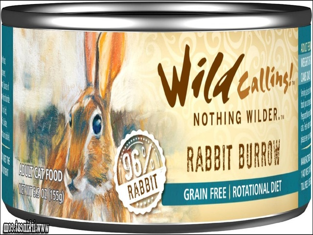best-wet-kitten-food Magical Solutions to Best Wet Kitten Food Disclosed