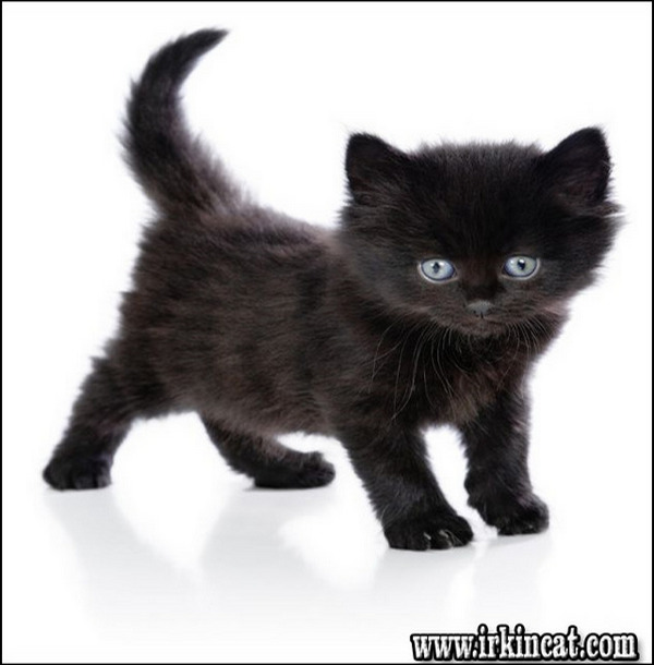 The Undeniable Reality About Boy Black Cat Names That No One Is Telling You Irkincat Com