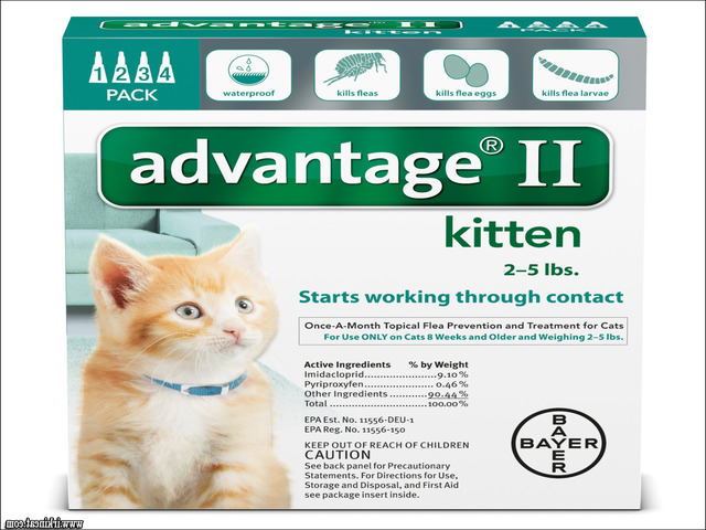 flea-medicine-for-kittens The Do's and Don'ts of Flea Medicine For Kittens
