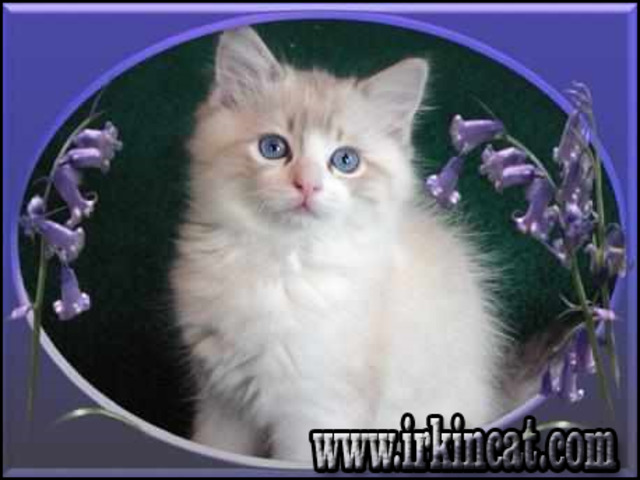 free-kittens-in-md The Benefits of Free Kittens In Md