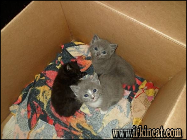 free-kittens-in-ri Top Advice on Free Kittens In Ri