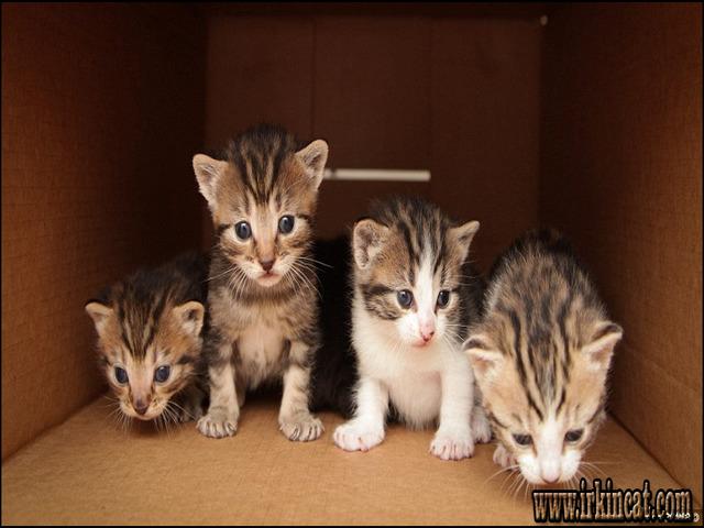 free-kittens-near-me The Secret to Free Kittens Near Me