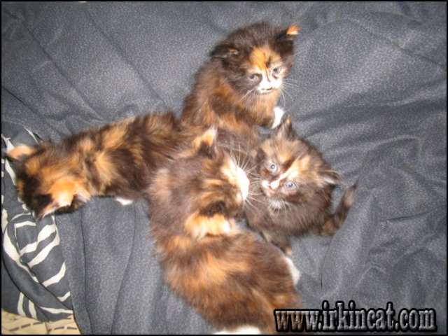 free-kittens-syracuse-ny What Is So Fascinating About Free Kittens Syracuse NY?