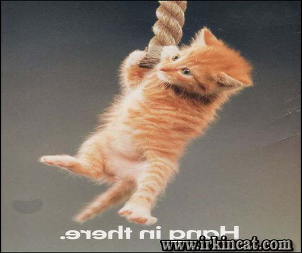 hang-in-there-kitten-poster The Ideal Approach for Hang In There Kitten Poster