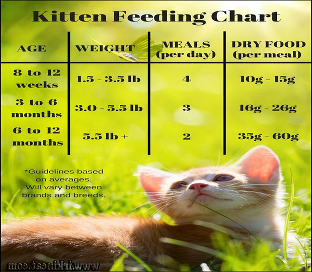how-long-to-feed-kitten-food The Top Secret Truth on How Long To Feed Kitten Food Exposed