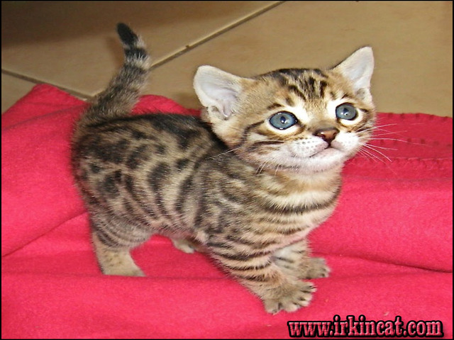how-much-is-a-kitten What the In-Crowd Won't Tell You About How Much Is A Kitten