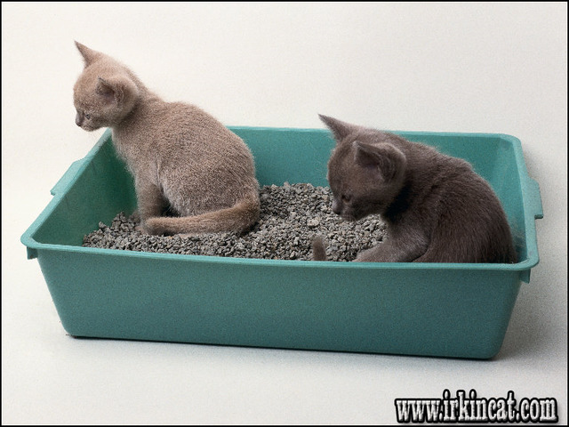 kitten-litter-box-training If You Read Nothing Else Today, Read This Report on Kitten Litter Box Training