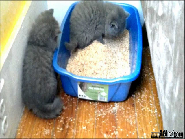litter-box-for-kittens The Undeniable Facts About Litter Box For Kittens and How It Can Affect You