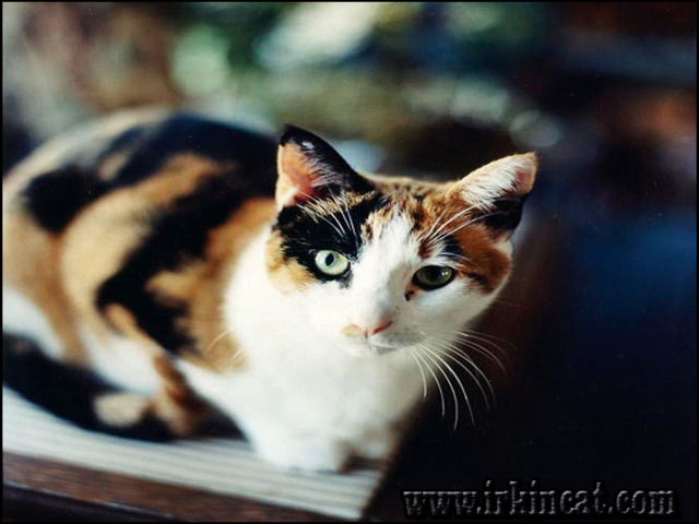 names-for-calico-kittens The True Story About Names For Calico Kittens That the Experts Don't Want You to Know