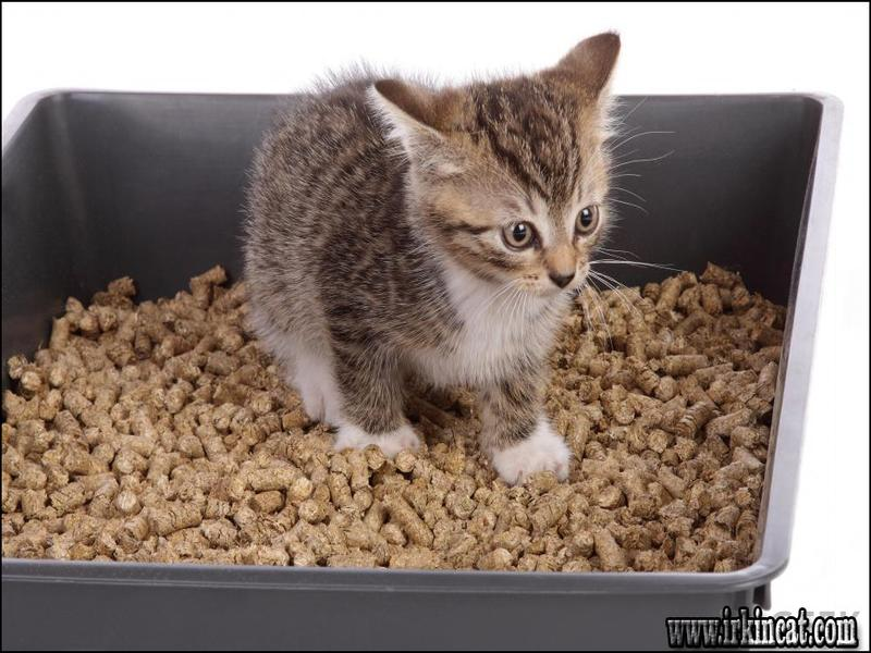 best-cat-litter-for-kittens Where to Find Best Cat Litter For Kittens