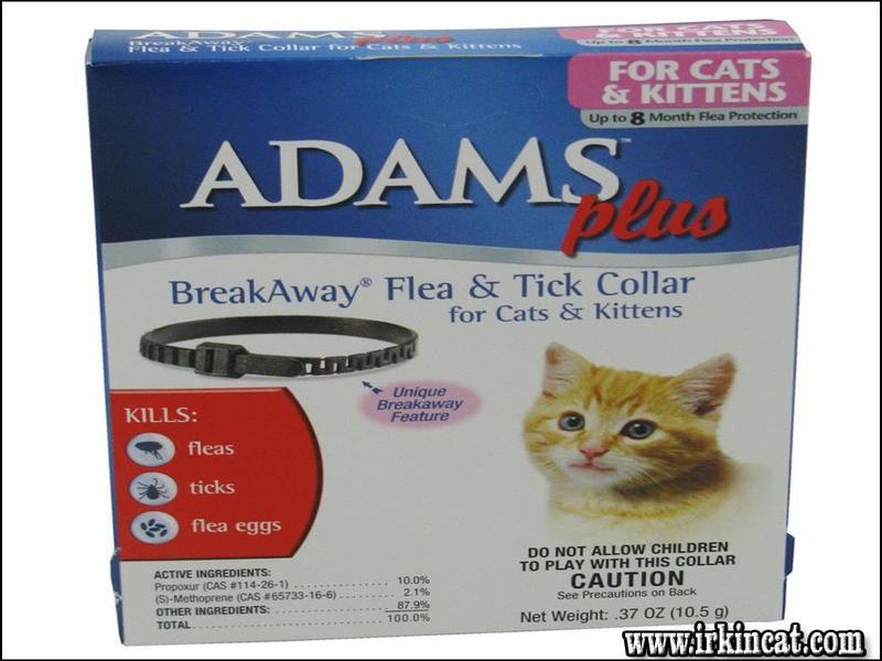 flea-collars-for-kittens The Flea Collars For Kittens Cover Up