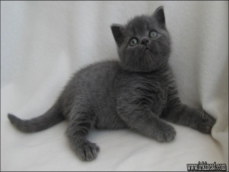 free-kittens-birmingham-al Top Free Kittens Birmingham Al Secrets