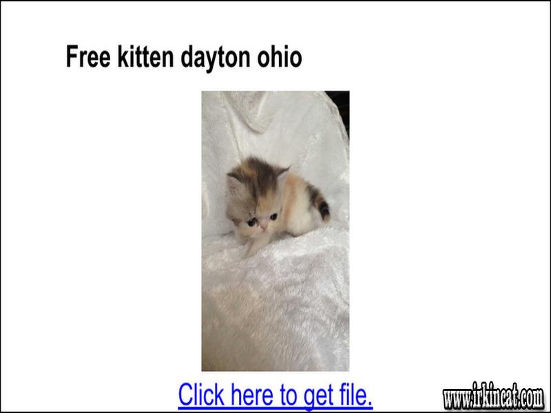 free-kittens-dayton-ohio The Biggest Myth About Free Kittens Dayton Ohio Exposed