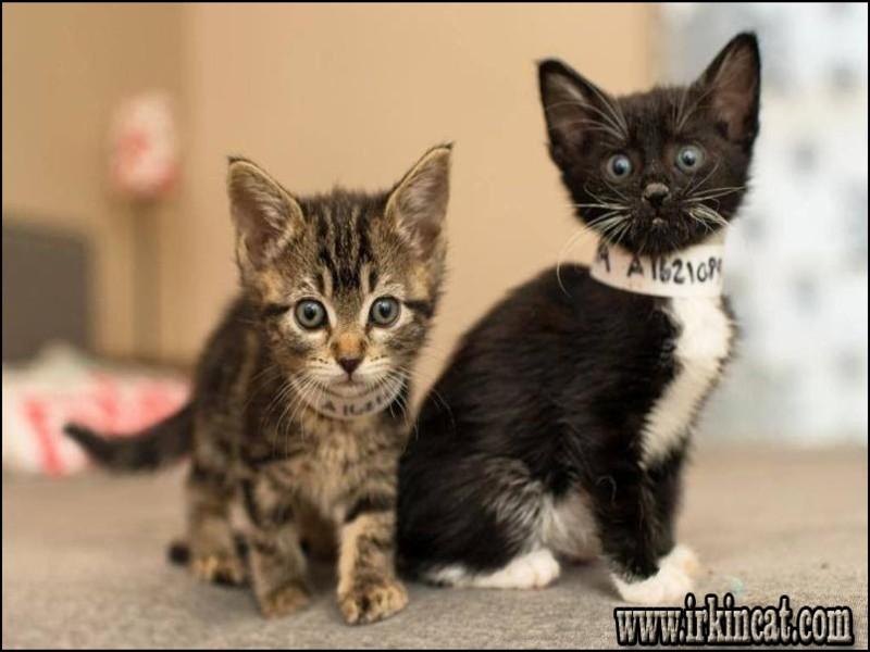 free-kittens-los-angeles Free Kittens Los Angeles Reviews & Guide