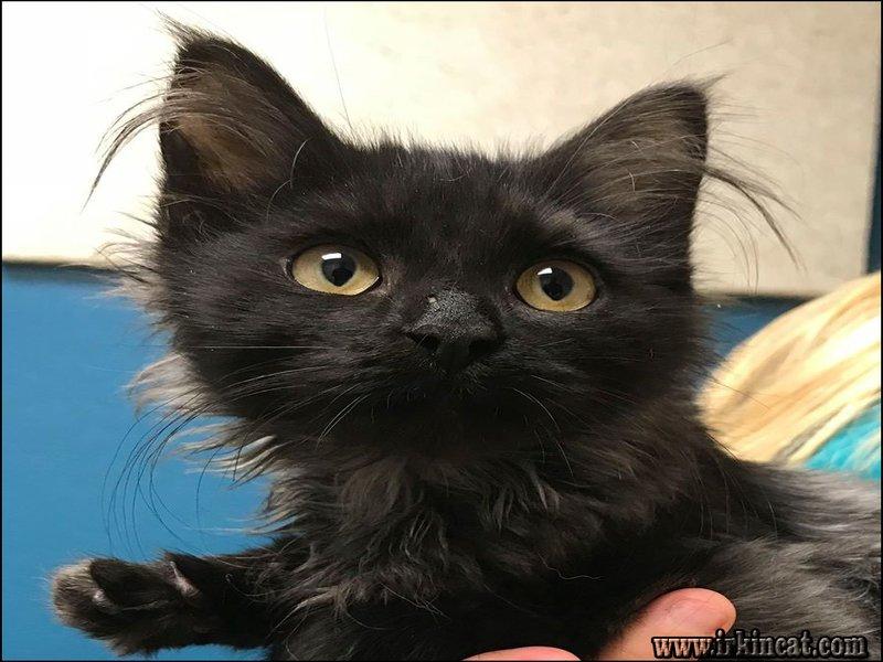free-kittens-wichita-ks Ruthless Free Kittens Wichita Ks Strategies Exploited