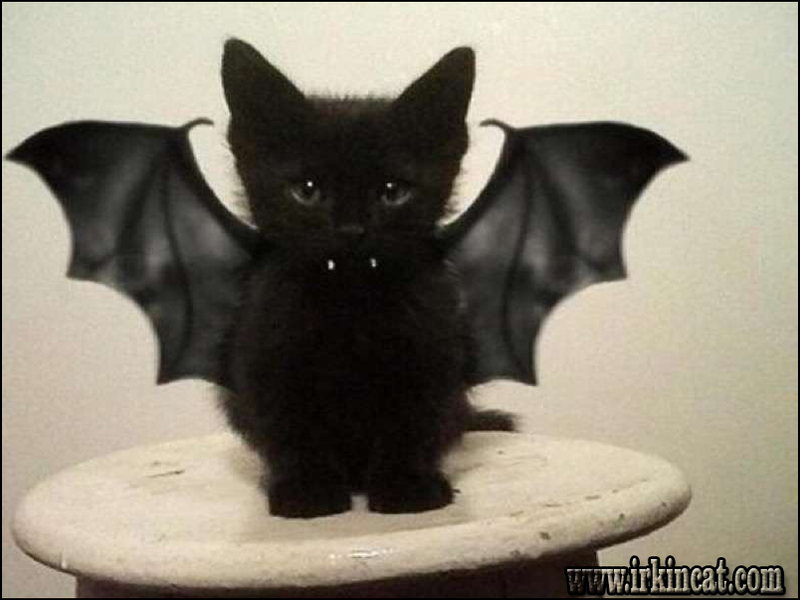 kitten-costumes-for-cats The Importance of Kitten Costumes For Cats
