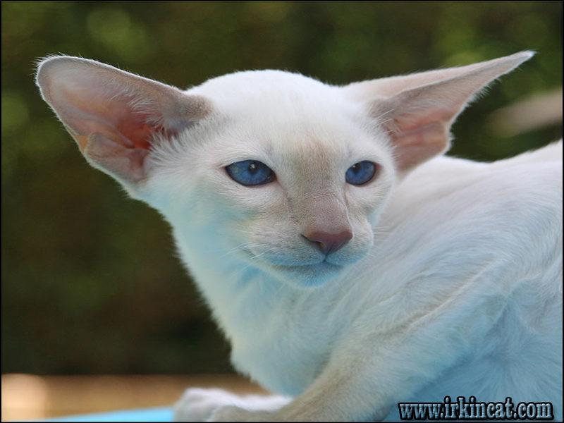 names-for-white-kittens A Review of Names For White Kittens