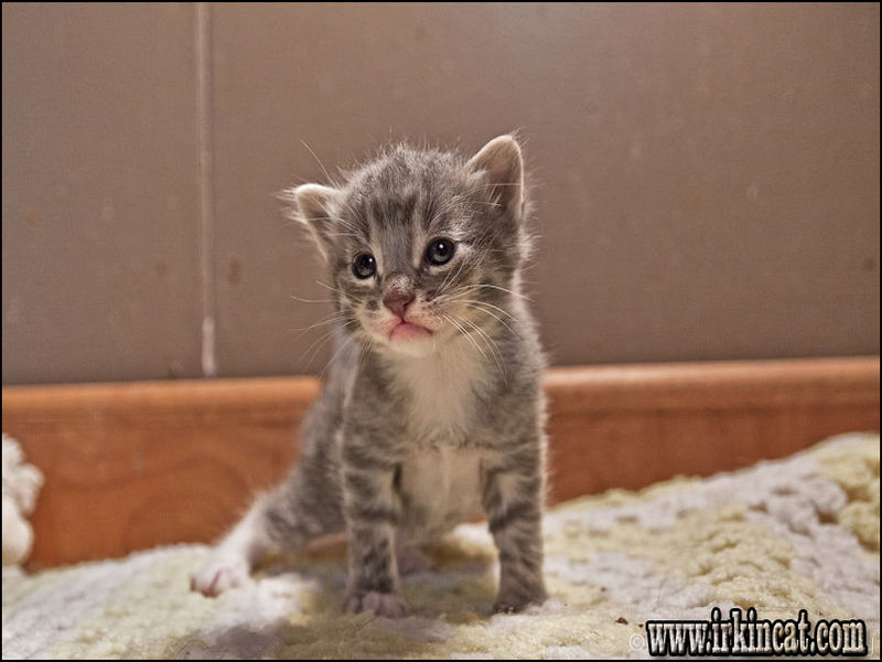 rescue-kittens-near-me Who Else Wants to Learn About Rescue Kittens Near Me?