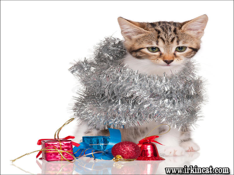 cute-kitten-accessories These Are 3 Cute Kitten Accessories That Are Often Used For Pet Cats