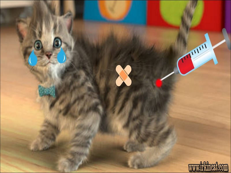 cute-puppies-and-kittens-games Things You Should Not Do With Cute Puppies And Kittens Games