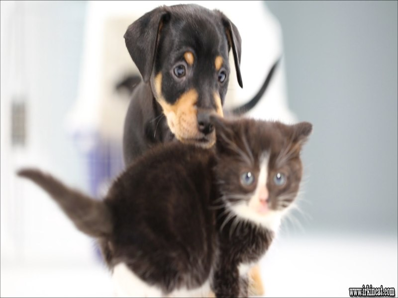 cute-puppies-and-kittens The Best Advice You Could Ever Get About Cute Puppies And Kittens